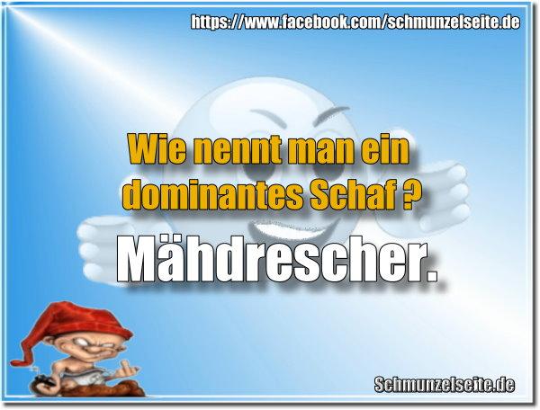 Dominantes Schaf