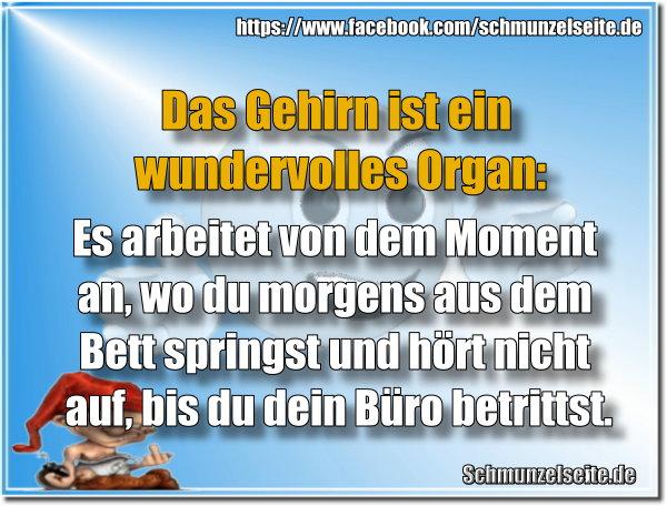 Wundervolles Organ