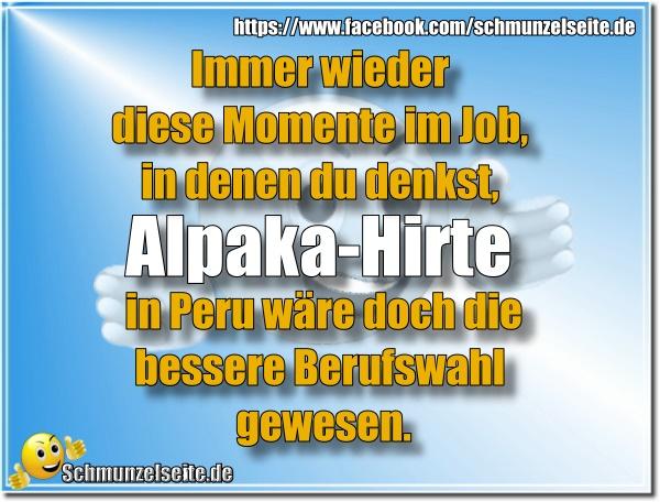 Alpaka-Hirte